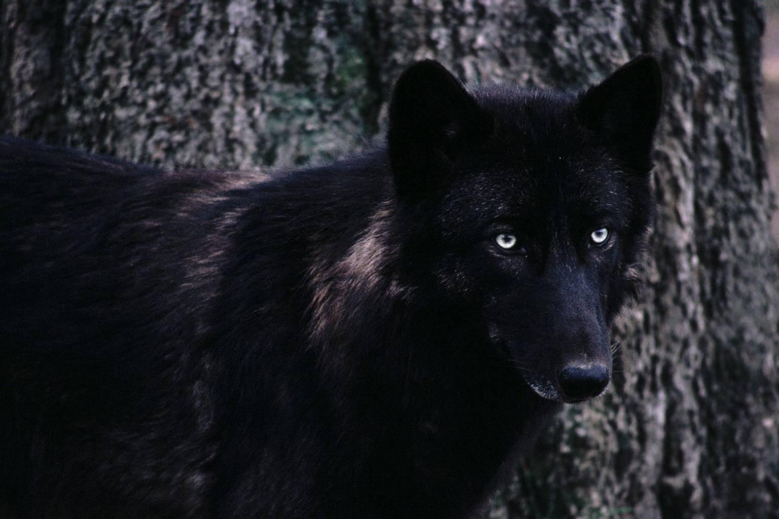 Darknes in the woods