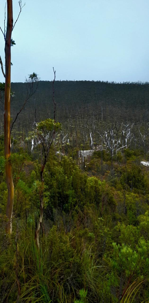 Wildwood hill