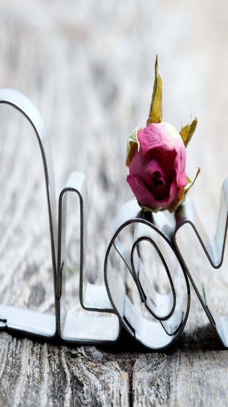 Love Hd Wallpapers Free By Zedge