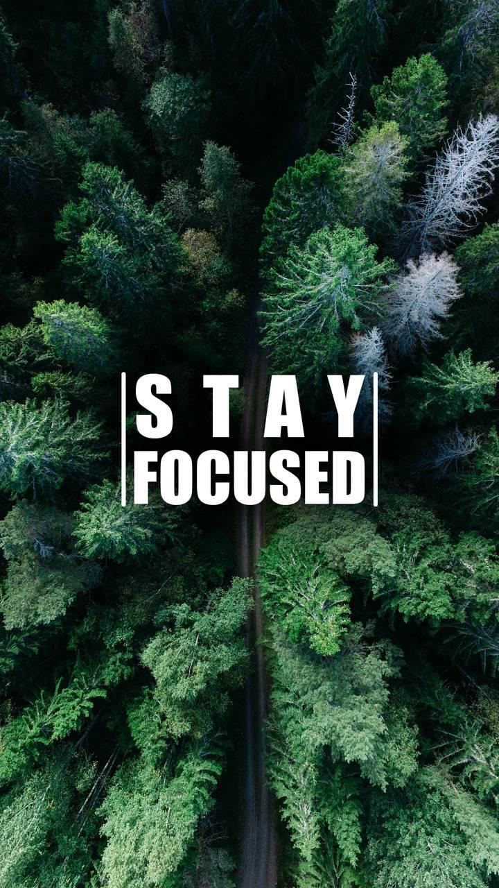 Stay Focused 3