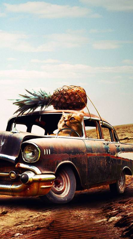 cat pineapple car