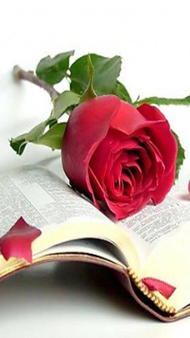 Red Rose 2 U
