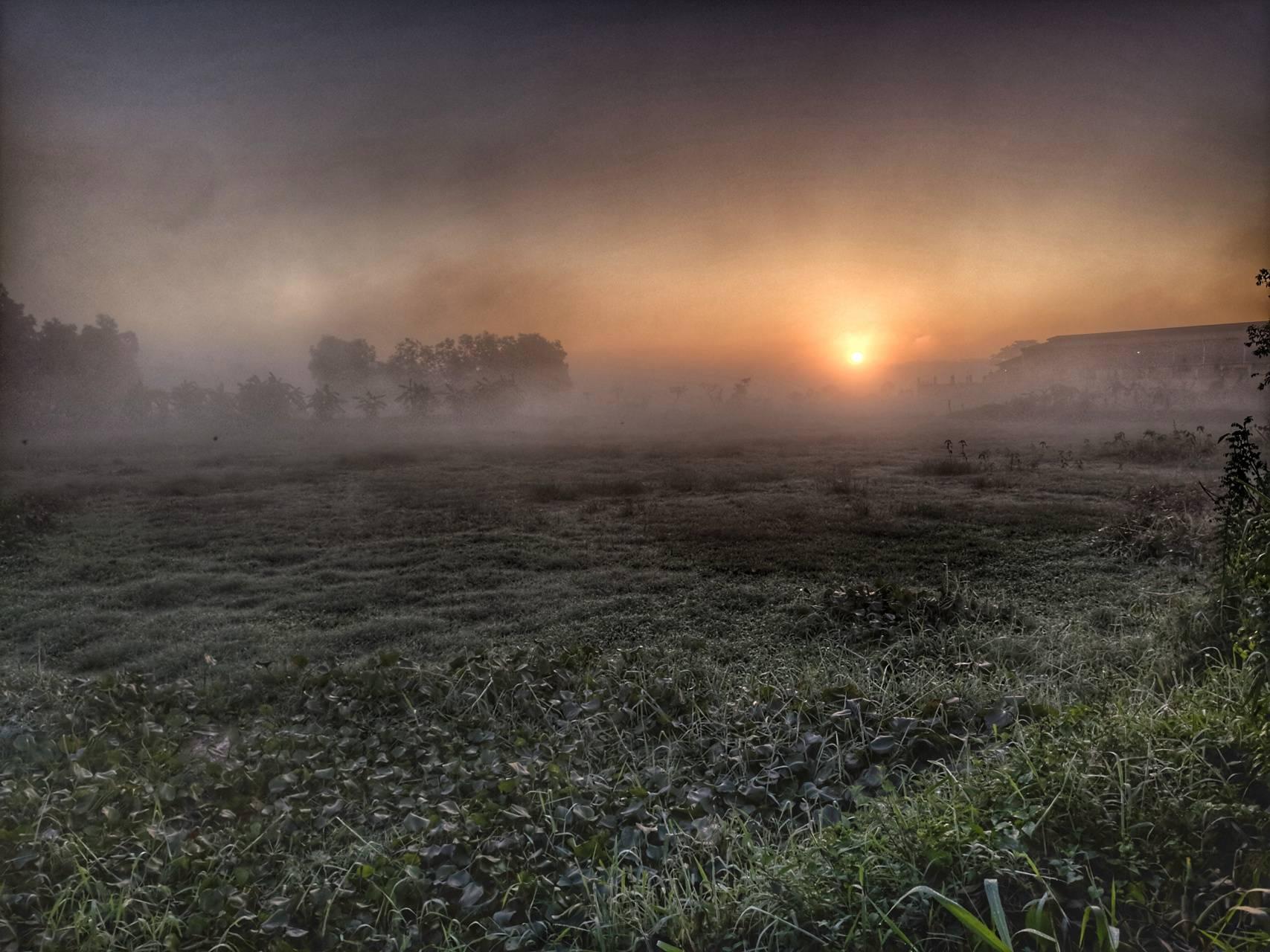Morning Dews