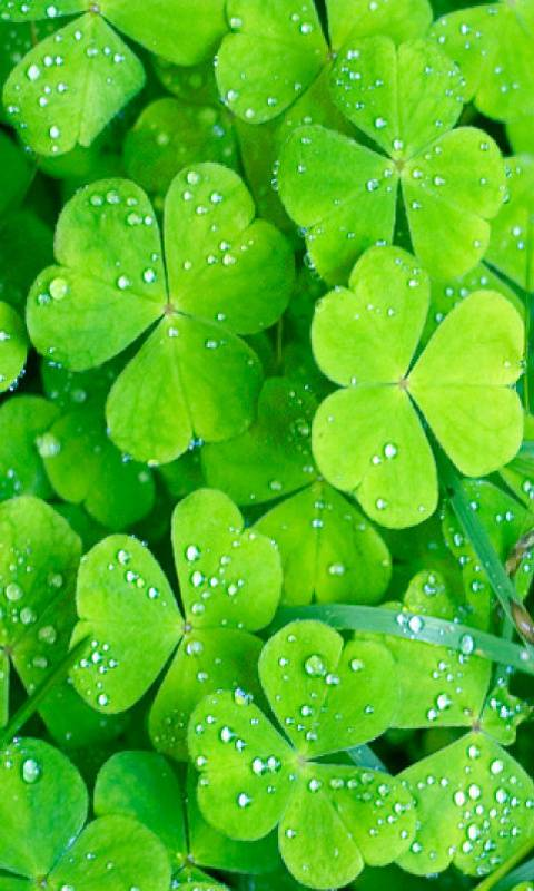 Irish Clover Wallpaper By Bobeem1315 Db Free On Zedge
