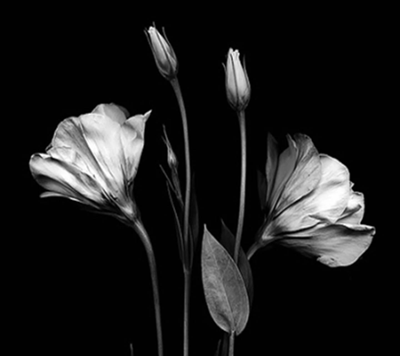 Black Amd White