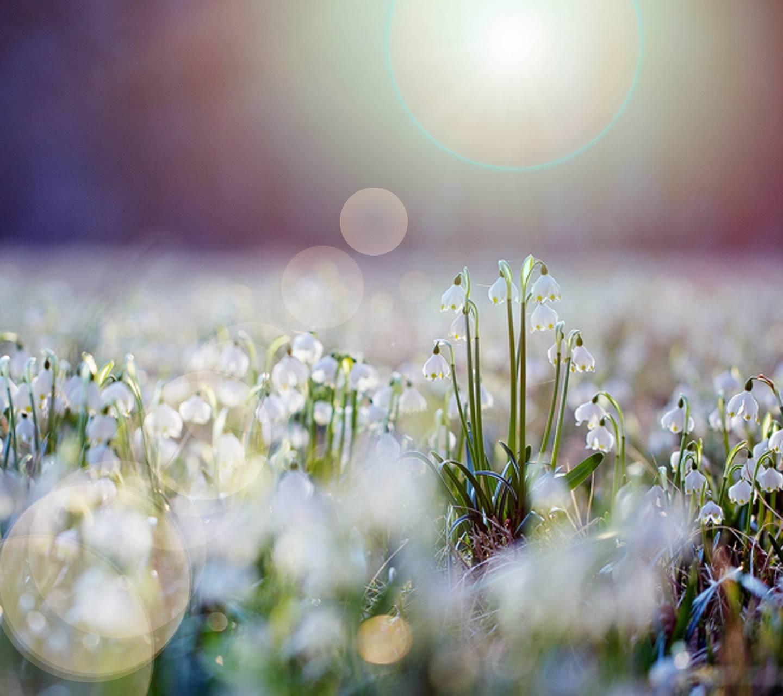 грудной картинки весна утро красота концепция представляет собой