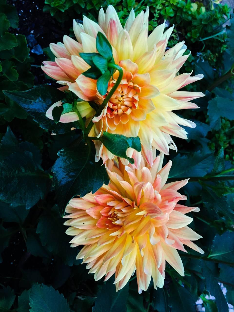 Flowers edited
