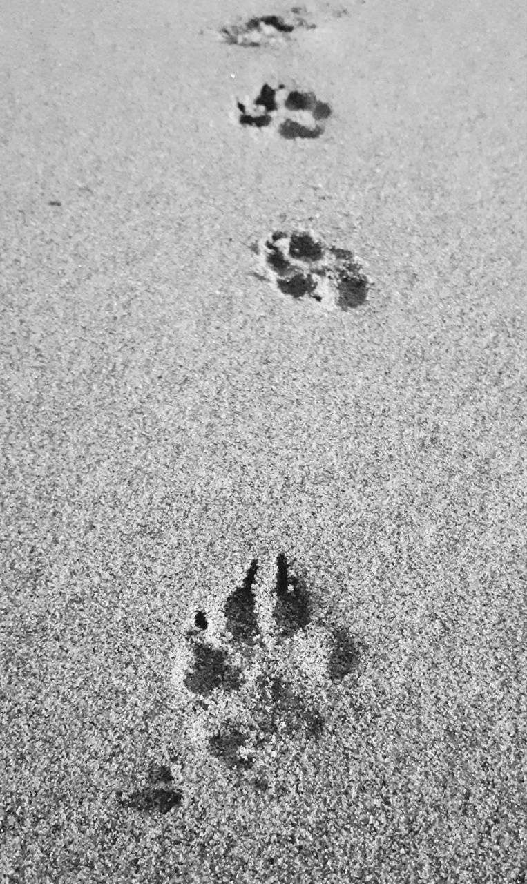 Paws In Sand