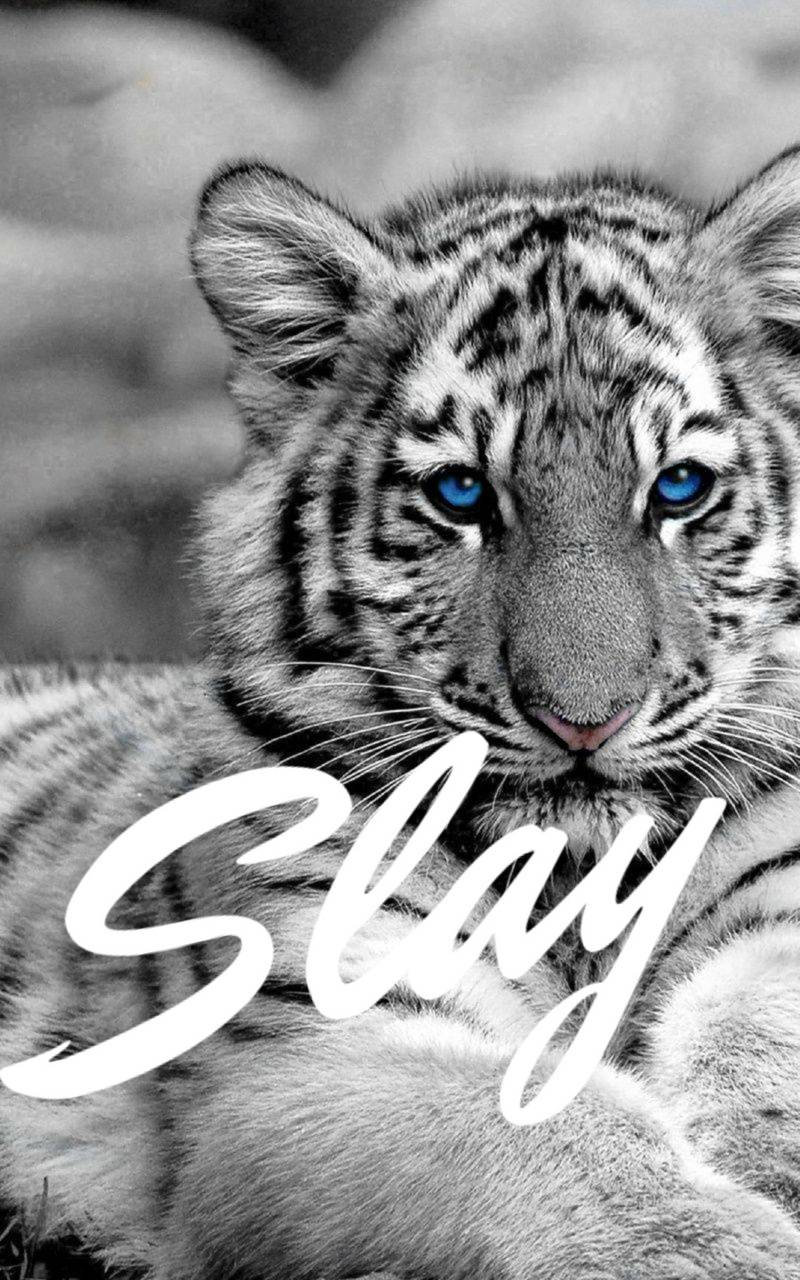 White tiger slay