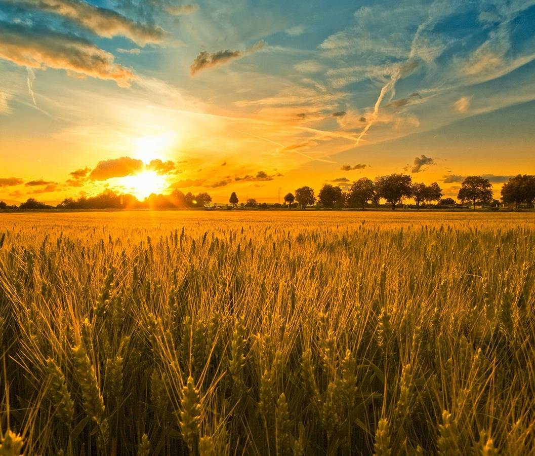 Sunset Field Hd
