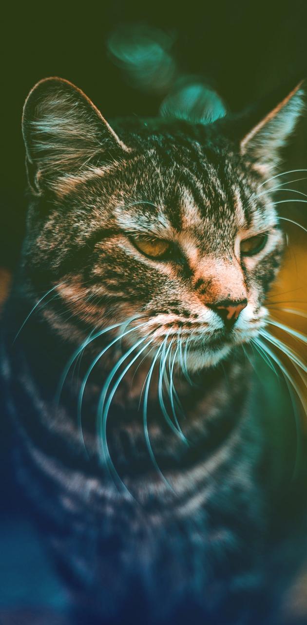 Serious Kitty