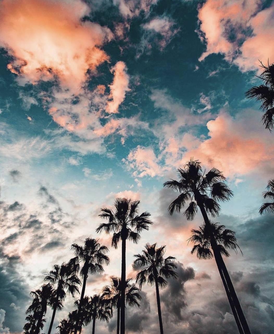 Plams and Skies