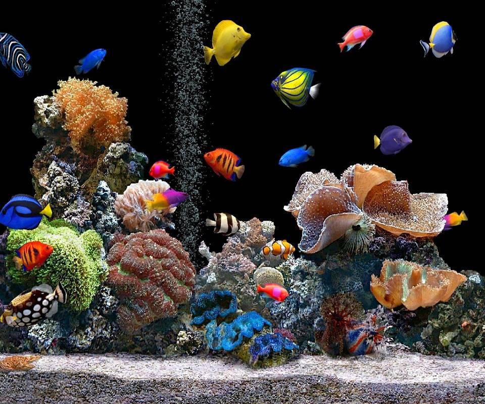 Aquarium-hd
