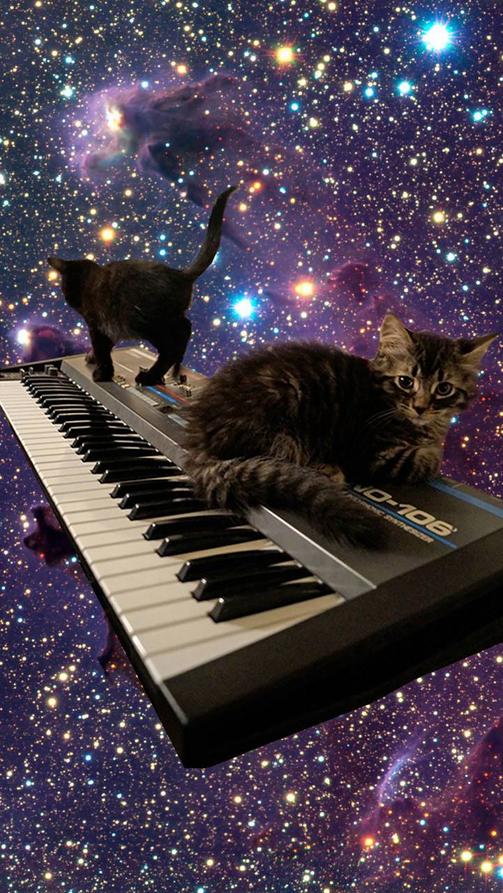 Cats on Keyboard