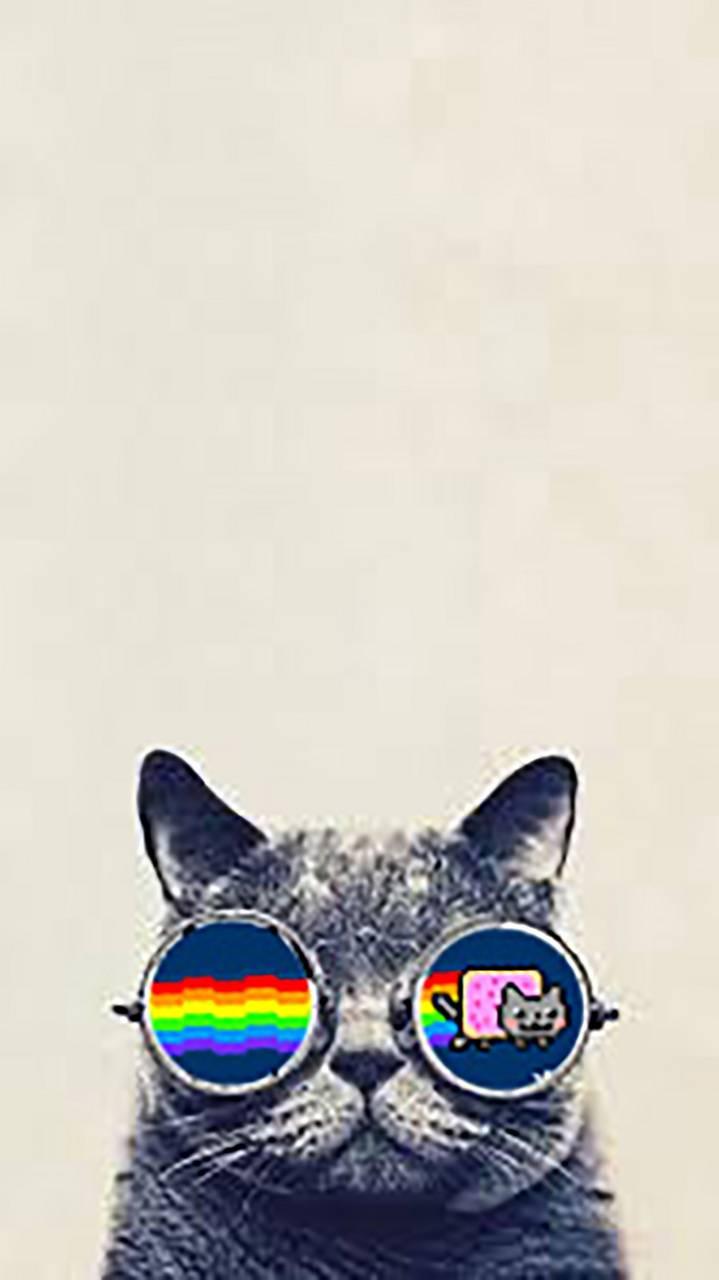 Hipster-Nyan cat