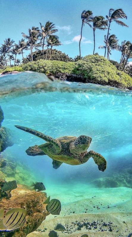 Turtle Wallpapers - Free by ZEDGE™