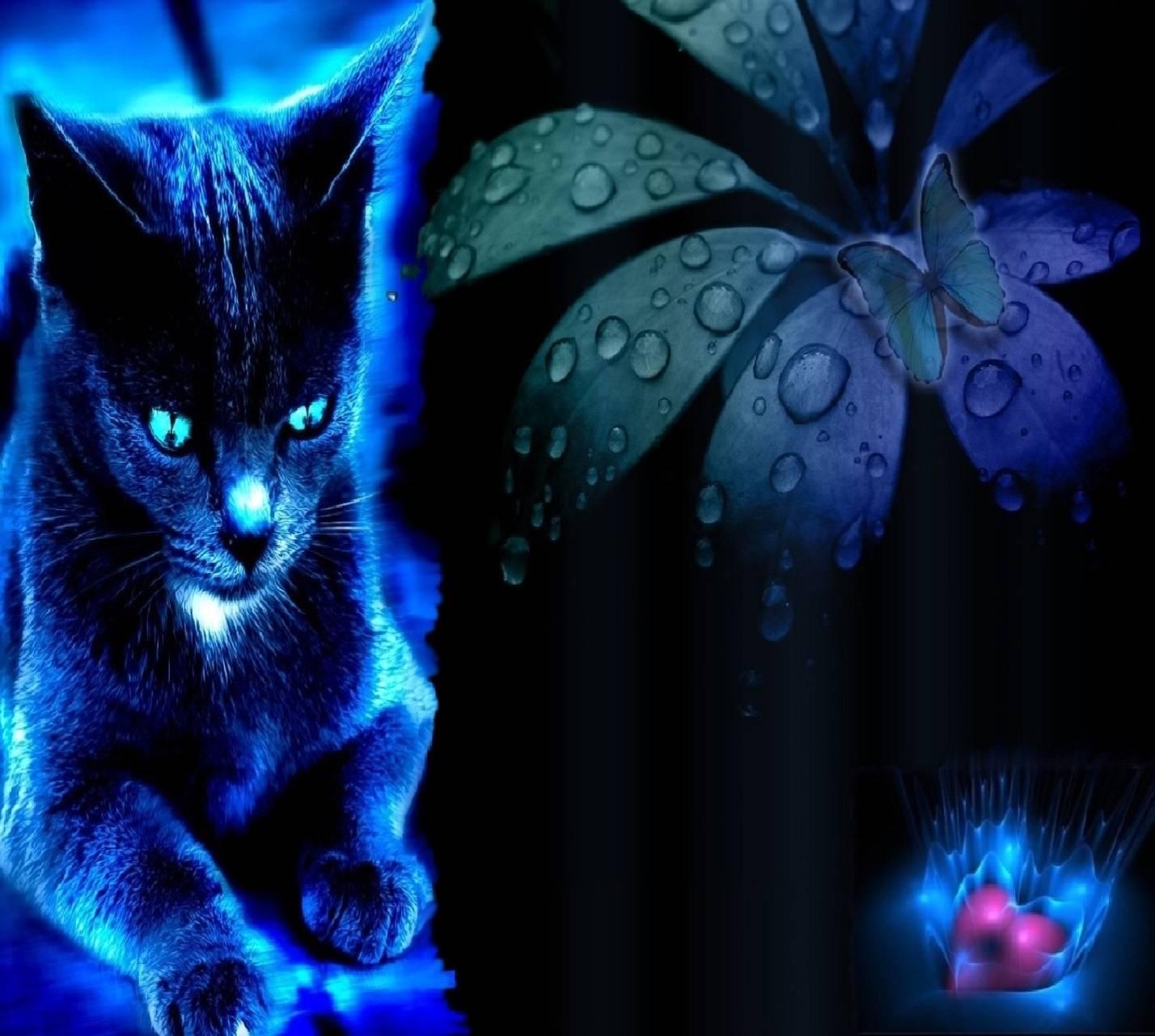 cat--------------