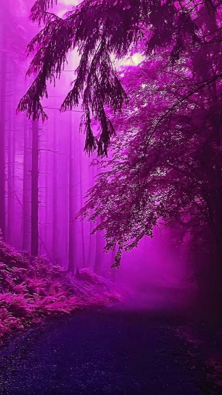 Purple foster