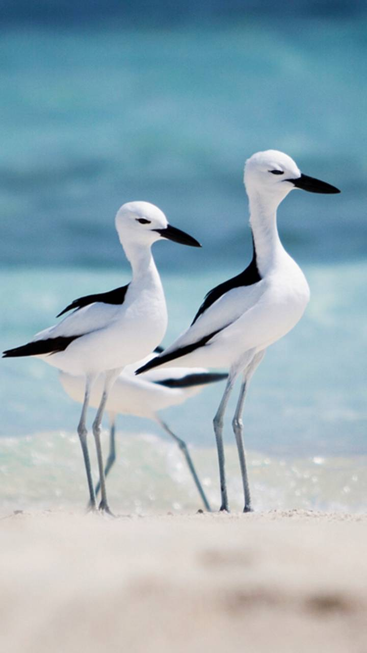 Sea And Birds