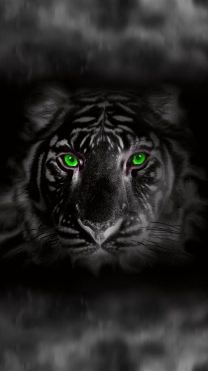 tiger black