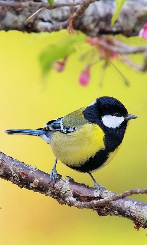 Titmouse on branch