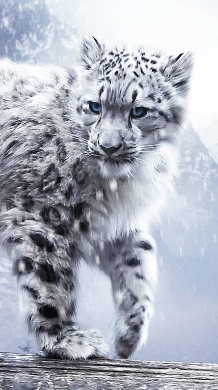 Snow Leopard Wallpapers Free By Zedge