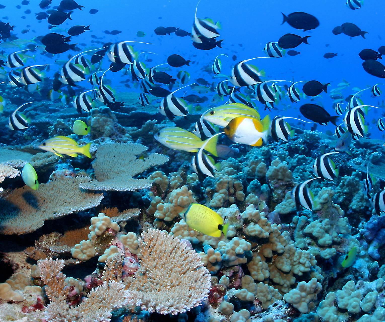 Underwater Utopia