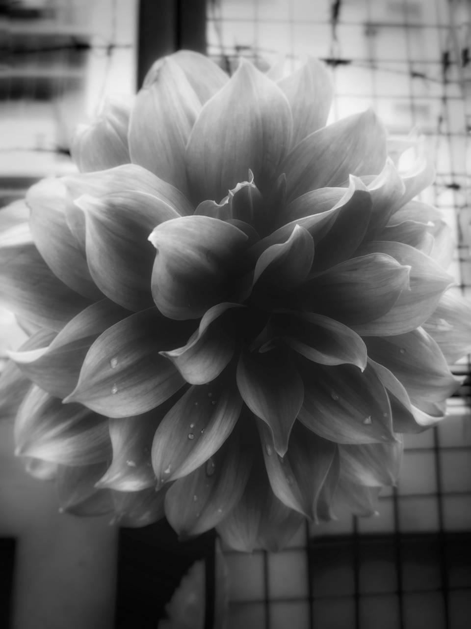Black-white puffy