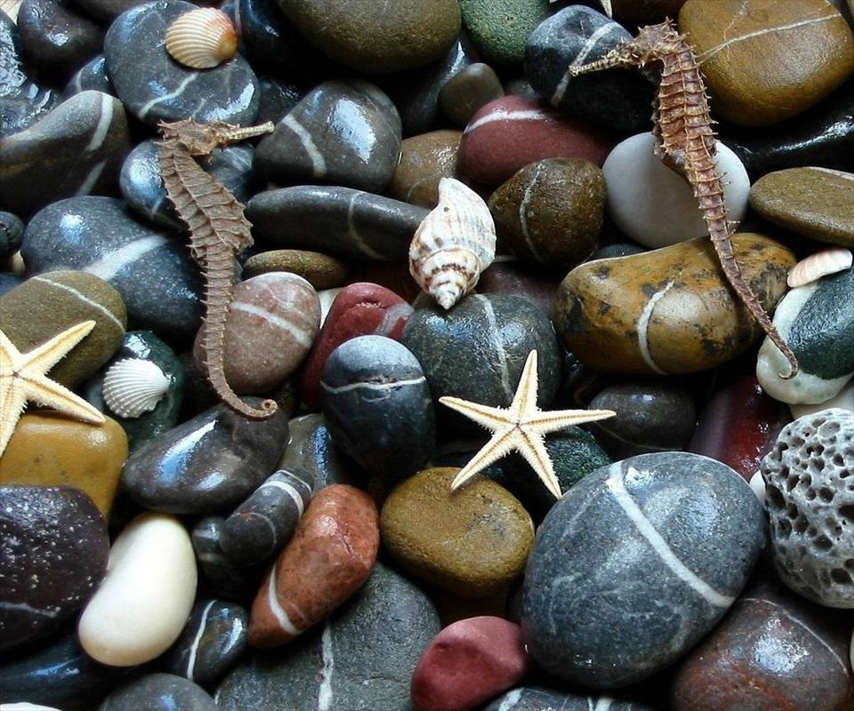 Aquatic Stones