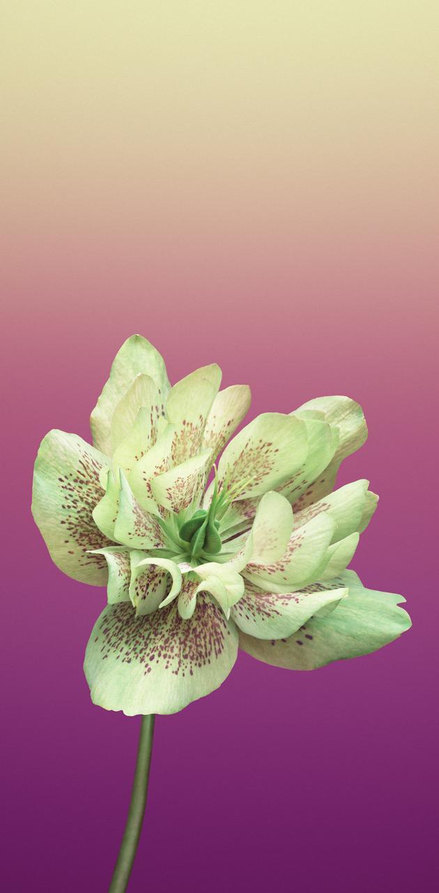 Flower 3D Original