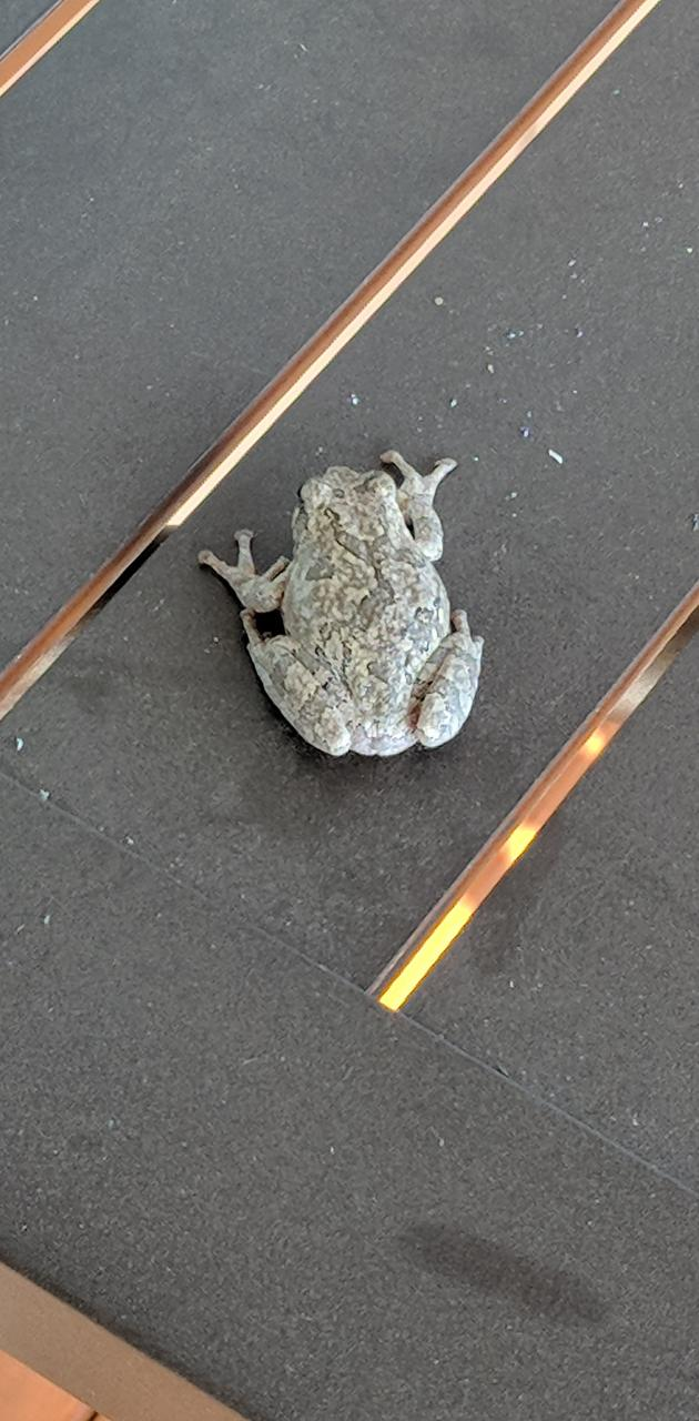 Frog on patio table