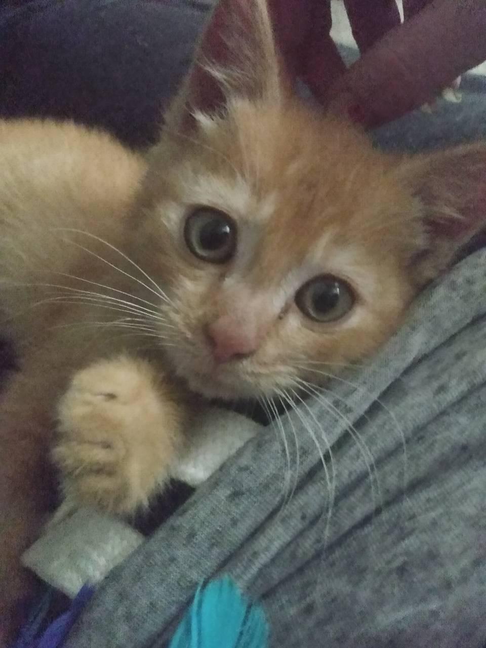 Cutest kitten face