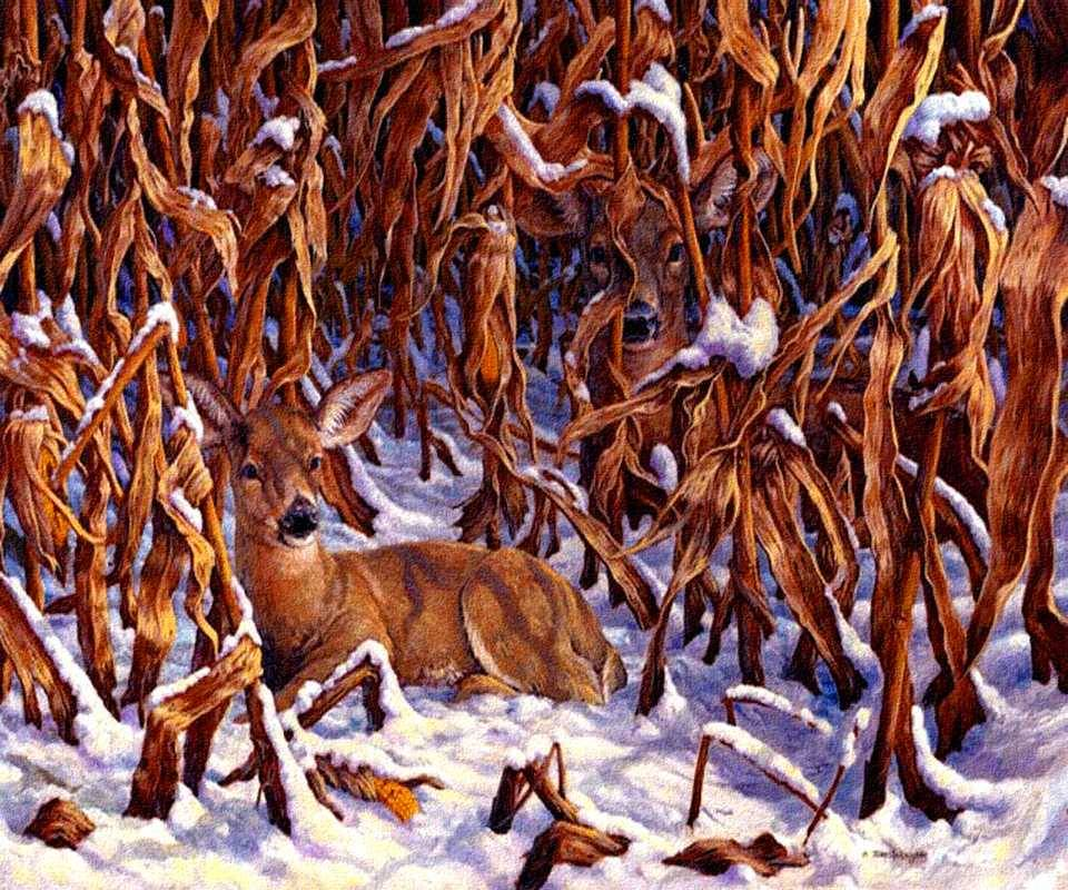 Deer In Cornfield