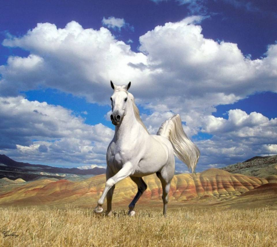 White Horse Wallpaper By Sonia 5e Free On Zedge
